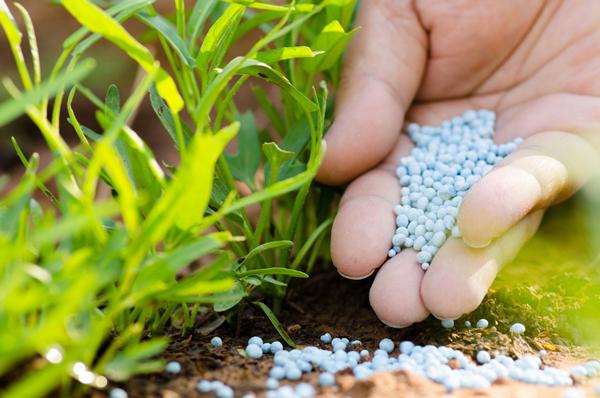 fertilizare plante