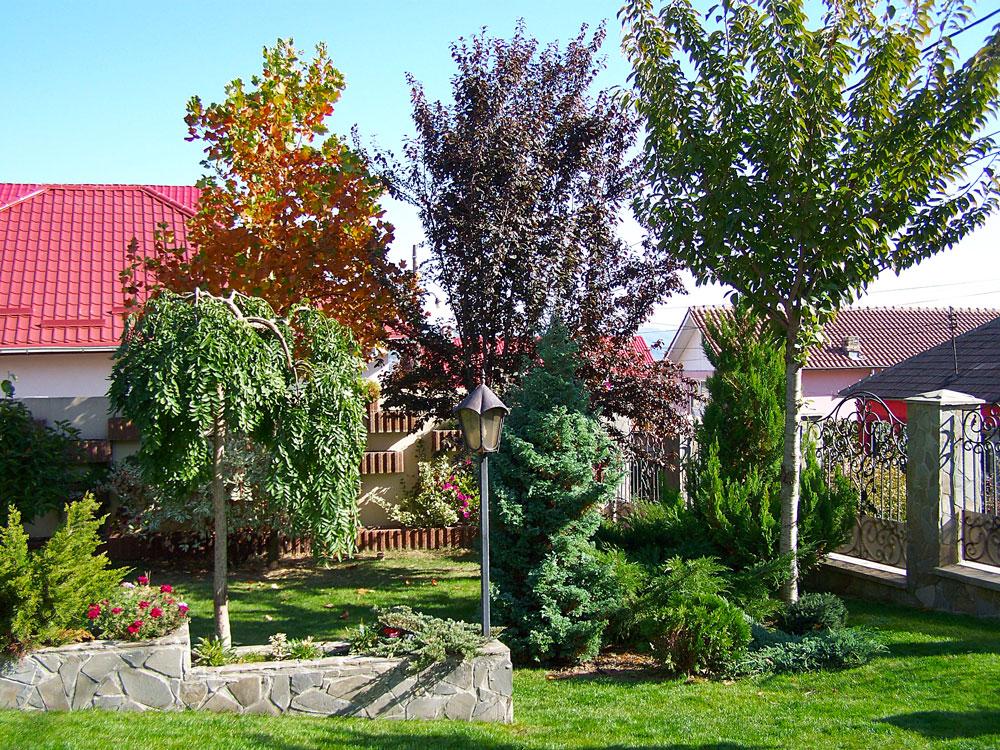 arbori de gradina