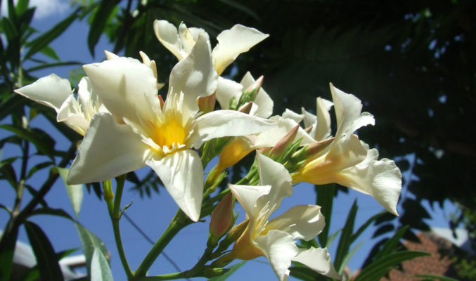flori frig